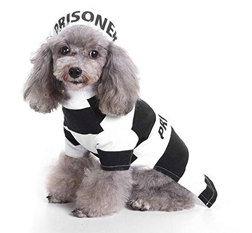 15-Best-Creative-Cheap-Pet-Halloween-Costume-Ideas-2019-12