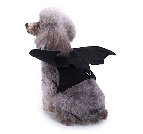 15-Best-Creative-Cheap-Pet-Halloween-Costume-Ideas-2019-9