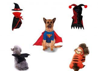 15-Best-Creative-Cheap-Pet-Halloween-Costume-Ideas-2019-F
