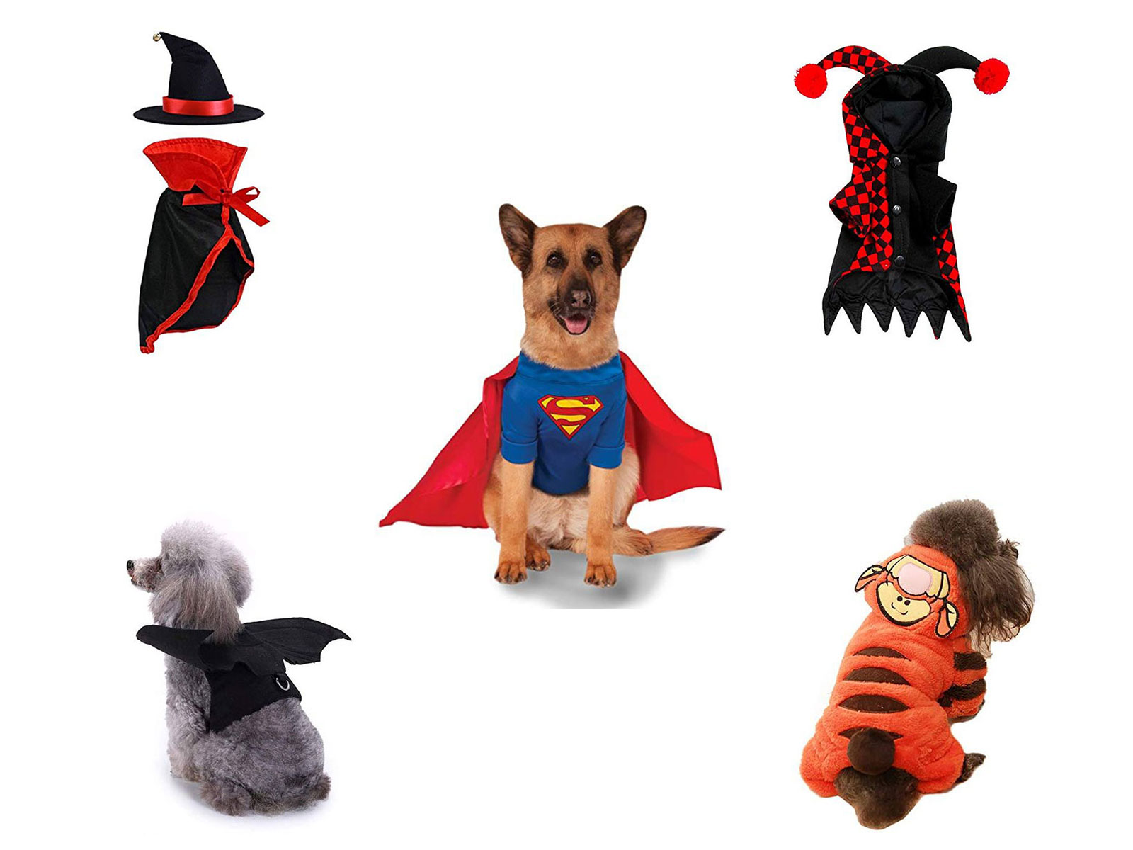 15-Best-Creative-Cheap-Pet-Halloween-Costume-Ideas-2019-F